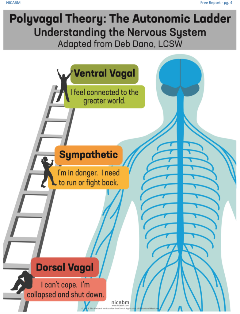 the polyvagal theory, deb dana, fight, flight,freeze